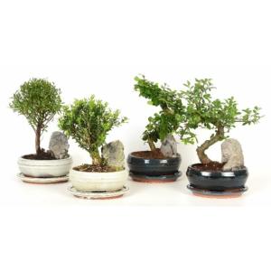 Kölönböző növények bonsai tálban