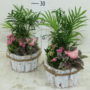 Növénykompozíció