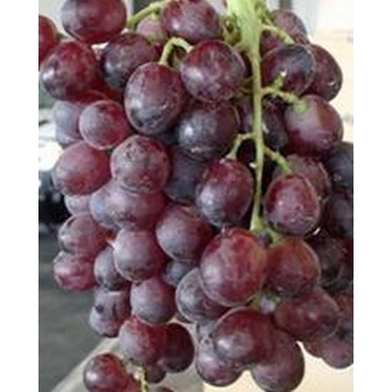 Ruby King Seedles csemegeszőlő